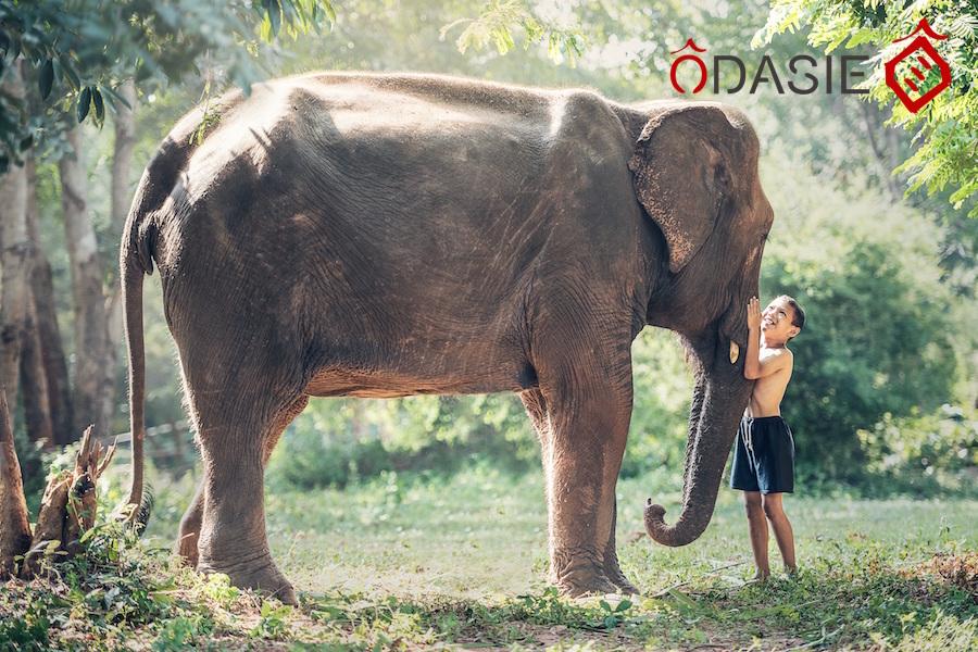 en-thailande-voir-les-elephants-autrement-tout-en-les-protegeant