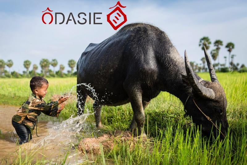 5-et-meme-6-raisons-d-aller-visiter-le-cambodge